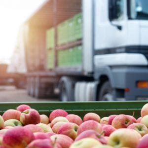 Cursa el Máster en Recolección, Transporte, Almacenamiento y Acondicionamiento de la Fruta